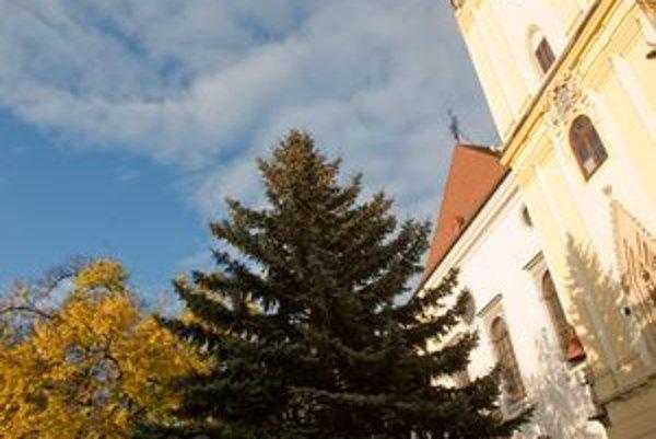Prvý symbol Vianoc osadia na Hlavnom námestí už v piatok. Minuloročný stromček.