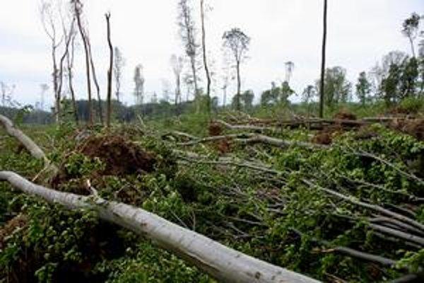 Popadané stromy v lesoparku znemožňujú bezpečný pohyb turistov i cyklistov. Takto to vyzerá na Bielom kríži.
