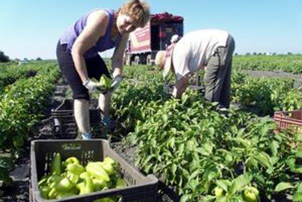 Ambulantní predajcovia neponúkajú len ovocie a zeleninu z vlastnej záhradky, ale nakupujú ju aj vo veľkom.