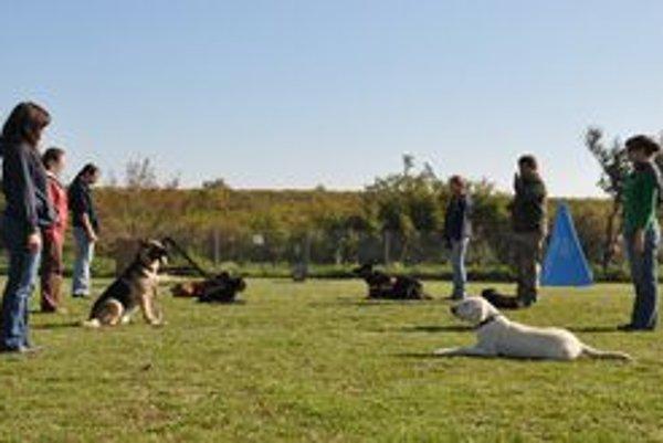 Na otvorení nového cvičiska pre výcvik psov v Modre sa predviedli aj členovia klubu so svojimi psami.