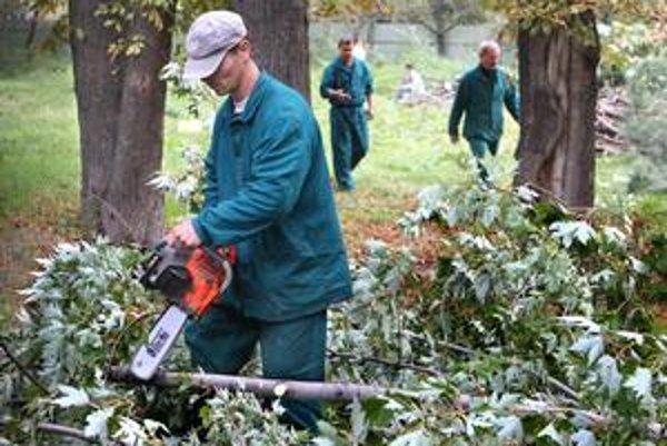 V októbri minulého roku v parku za rozhlasom spoločnosť Strabag-Zipp nelegálne rúbala stromy. Zmizlo ich vtedy dvanásť.
