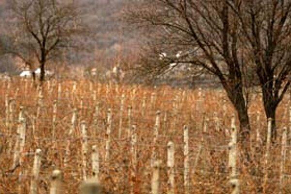 Premena vinohradov na stavebné pozemky bola v Bratislave témou dlho predtým, ako Mikuláš Dzurinda obvinil premiéra Fica, že sa chcel na jednom z pozemkov obohatiť.