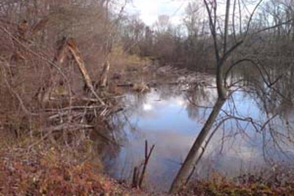 Súčasťou lesoparku budú aj chránené mokrade.