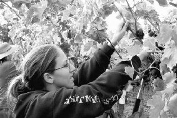 Pre manuálne práce, napríklad na farmách, vo výrobe alebo v skladoch, nepotrebujete žiadne skúsenosti ani vzdelanie.