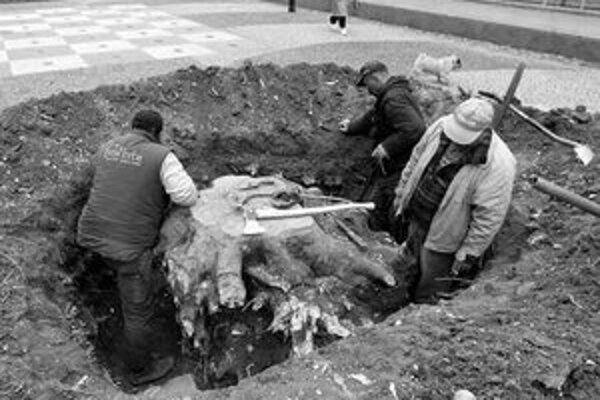 Na Hviezdoslavovom námestí sa kopalo. Nie je to začiatok stavby sektbaru, ale príprava na vysadenie nového stromu na mieste platana, ktorý vyťali pri úprave námestia pred šiestimi rokmi.