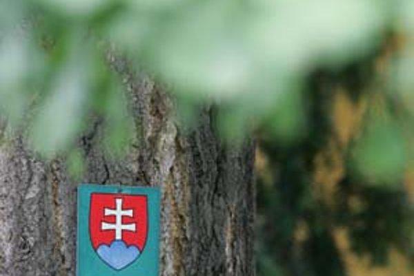 Chránených stromov je na Slovensku spolu 1320, ich poškodenie sa trestá pokutou. Na snímke ginkgo na Godrovej ulici.