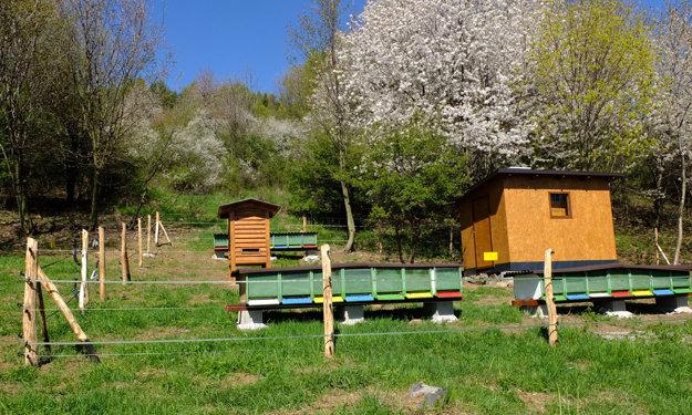 Včelnica medzi rozkvitnutými ovocnými stromami.