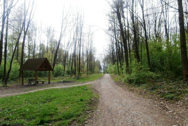 Lesopark Chrasť bude chudobnejší o niekoľko desiatok stromov. Ilustračné foto.