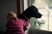 Objímanie nie je pre psov prirodzené.