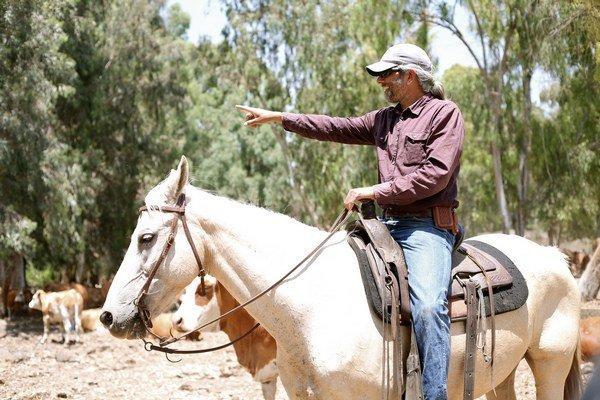 Niektoré mínové polia armáda vyčistila, no iné zostávajú zo strategických či z finančných dôvodov nedotknuté a kovboji si musia so zatúlanými kravami poradiť pomocou psov.