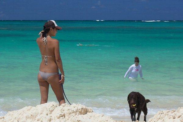 Domáci miláčik môže stráviť dovolenku pri mori spolu s vami.