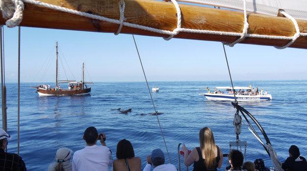Pri brehoch Tenerife môžete vidieť až 26 druhov veľrýb.