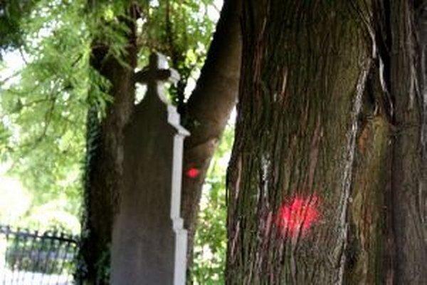 Časť stromov v cintoríne označili.