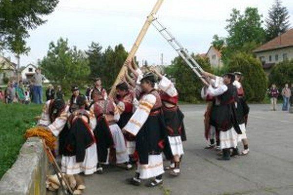 Máje v Detve stavajú chlapci z detvianskych folklórnych kolektívov.