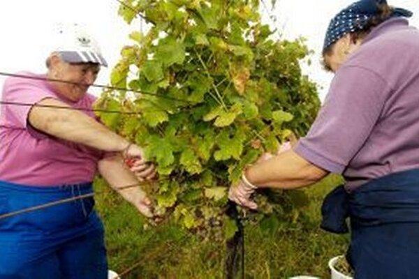 Dnes si všetci vinohradníci uctia svojho patróna.