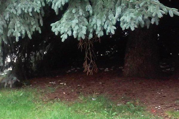 Neporiadok pod stromami.