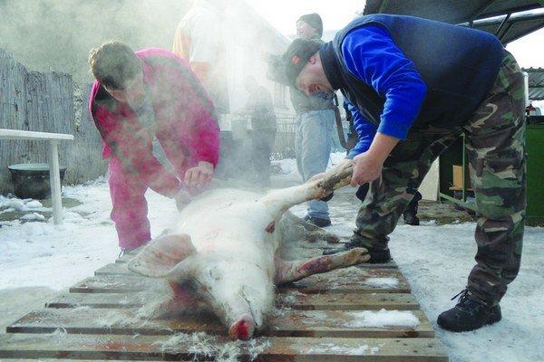 Od 4. apríla je v Levickom okrese povinné dať si vzorky z domácej zabíjačky skontrolovať. U divej zveri našli svalovca, ktorý sa môže preniesť na domáci chov.
