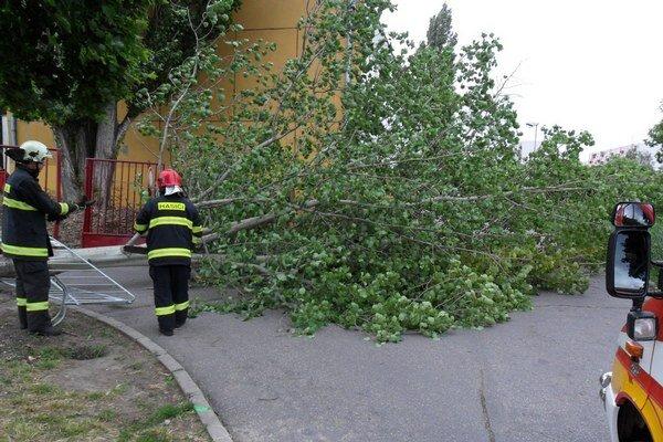 Strom padol aj na chodník pri bránku do areálu školy.