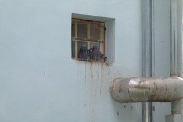 Aj napriek rôznym mechanickým zábranám si holuby nájdu svoje miesto.