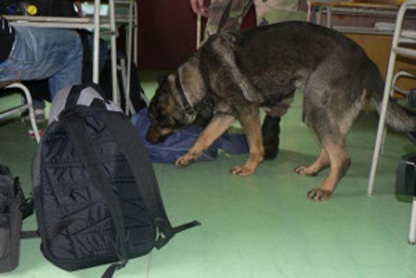 Policajti v Leviciach využívajú na vyhľadávanie drog dvoch špeciálne vycvičených psov.