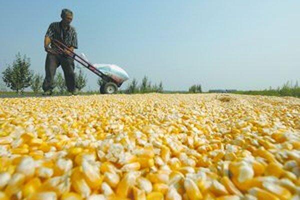 Ceny kukurice a pšenice vyleteli tak vysoko, že to ovplyvnilo globálne ceny potravín. Za jedného