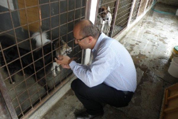 V priestoroch bývalých kasární v Senici našli opustené psíky svoj dočasný domov.