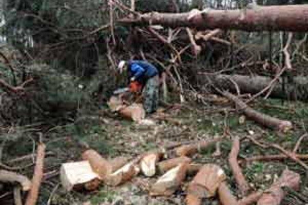 Na snímke z 5.marca 2008 pohľad na škody spôsobené víkendovou víchricou v Malackách v Zámockom  parku v okolí historického Pálffyho kaštieľa.