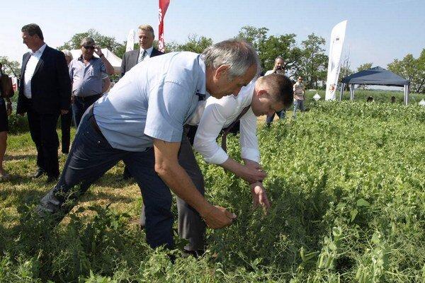 S. Becík a R. Fico tunajšie plodiny aj ochutnali.