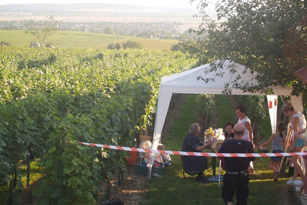 Vínny festival priamo vo vinohradoch.