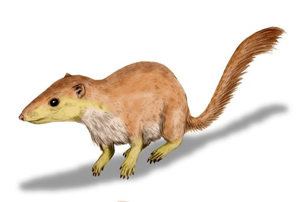 Purgatorius unio, jeden z prvých druhov cicavocv