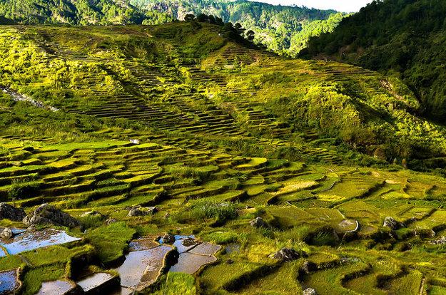 Farebnosť ryžových polí v Sagade záleží na období návštevy.