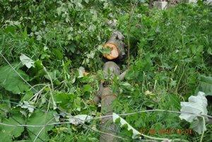 Silný vietor vyvrátil strom.