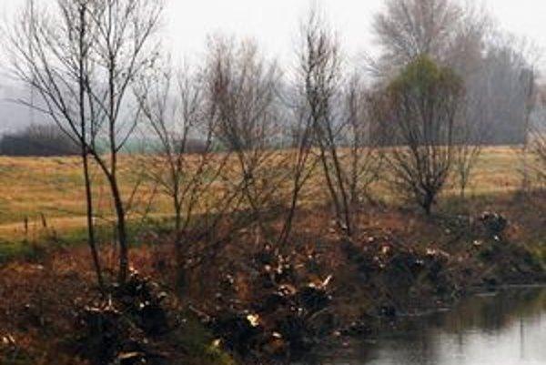 Brehy očistené od porastu by nemali zachytávať naplavené drevo.Prietok vody bude vyšší.
