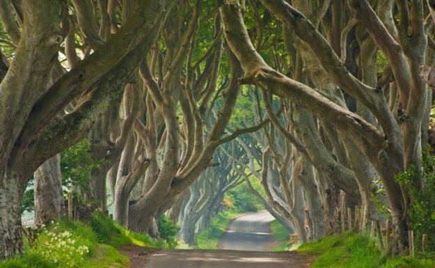Potom, ako sa dvestoročná buková aleja Dark Hedges objavila v seriáli Hra o tróny, zažíva turistický boom.