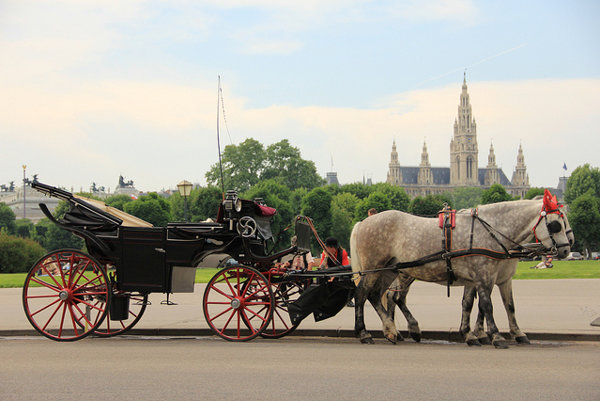 Viedenskí poslanci odhlasovali úľavy pre kone vo viedenských fiakroch počas horúčav.