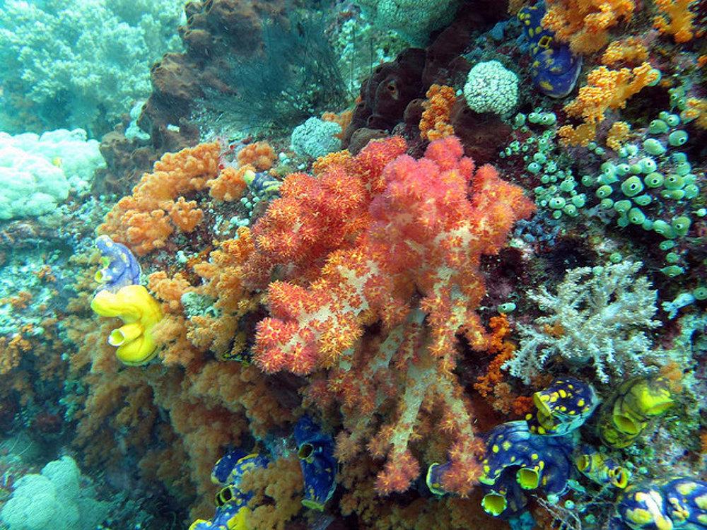 Pestrofarebné koraly a bohatá príroda pod hladinou sú pre potápačov veľké lákadlo.