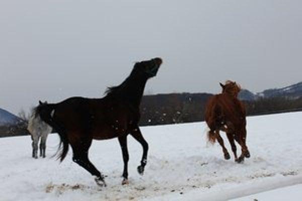 Obec sa preslávila aj chovom koní a furmanskými pretekmi.