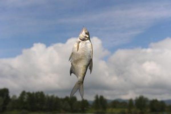 Sladkovodné ryby sa u nás jedia málo, rybolov živí len veľmi malú skupinu ľudí.