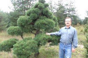 Milan Žáčik tvaruje v prírode hlavne borovice