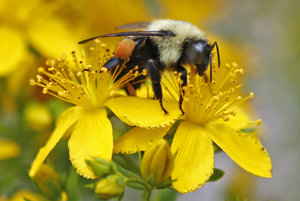 Včely majú vážne problémy.