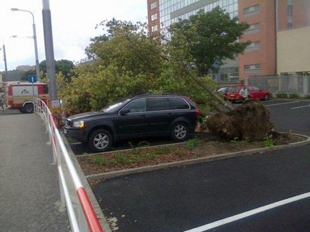 Vietor vyvrátil strom pred košickým kúpaliskom.