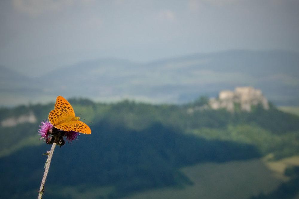 Odpočinok s výhľadom na Lietavský hrad