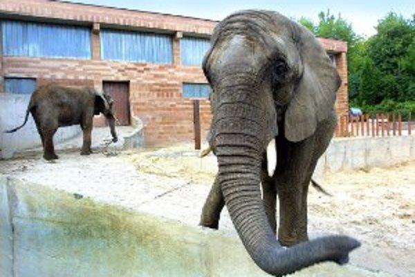 Aj slony z bojnickej zoo budú snímať kamery.