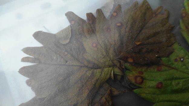 Postrakom zničené rastliny mali na sebe takzvané