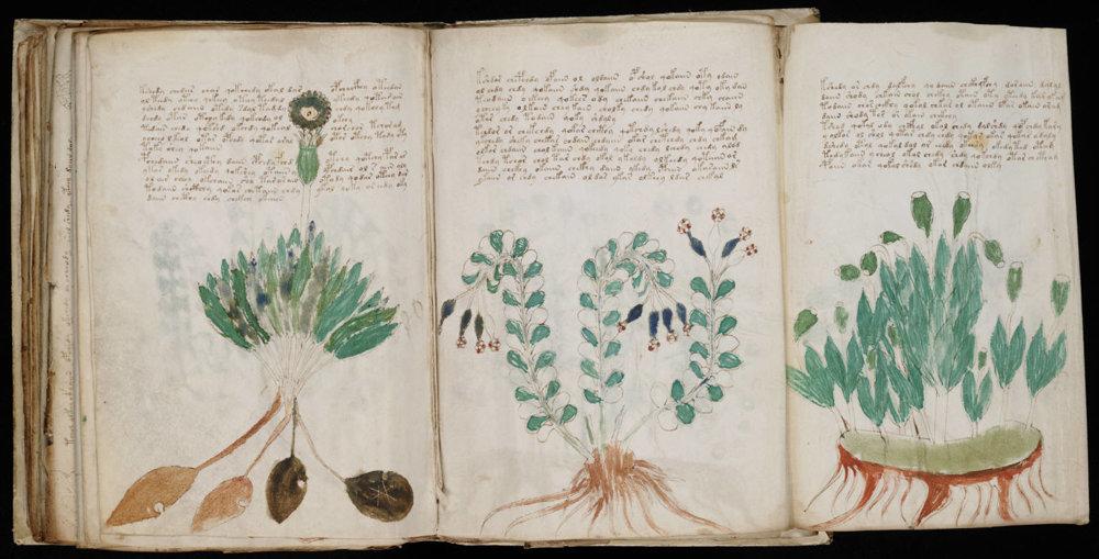 Voynichov rukopis.
