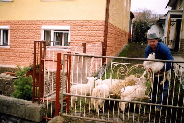 Vždy okolo Mateja, teda koncom februára, sa zvyknú kotiť ovce a pre gazdov to znamená, že sa opäť roztáča kolobeh každodennej starostlivosti a trvá až do jesene, do Michala.