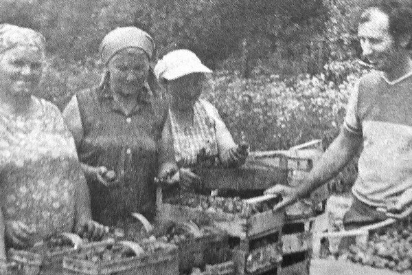 V Ivachnovej sa kedysi vo veľkom pestovali jahody.