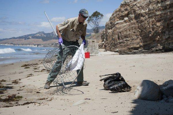 Medzi ohrozené druhy patria najmä pelikány.