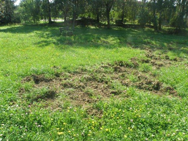 Rozrytý trávnik na prievidzskom sídlisku Kopanice.