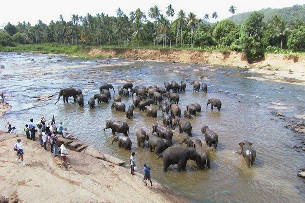 Srí Lanka je rajom pre milovníkov prírody a exotickej divočiny.